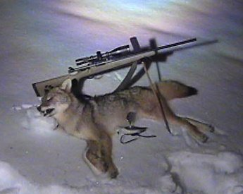 Scent and scent control for coyotes foremost coyote hunting scent and scent control for coyotes sciox Image collections